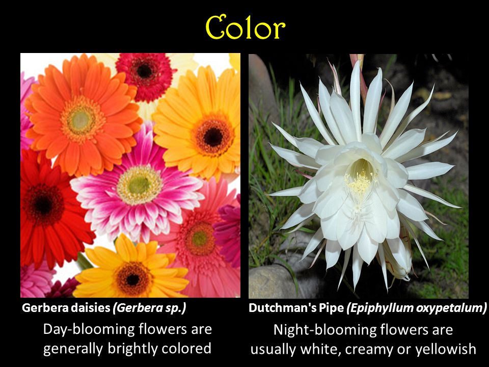 Color Day-blooming flowers are generally brightly colored