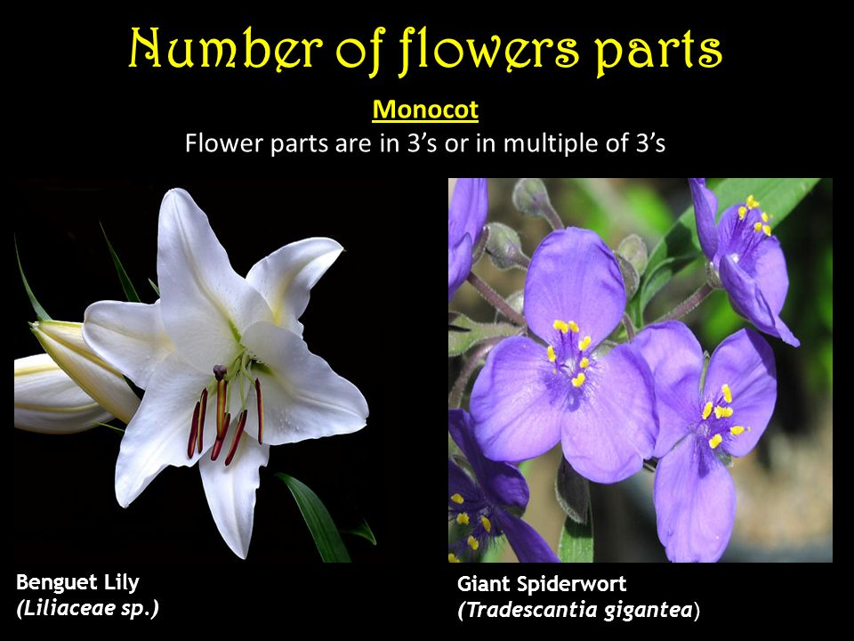 Number of flowers parts