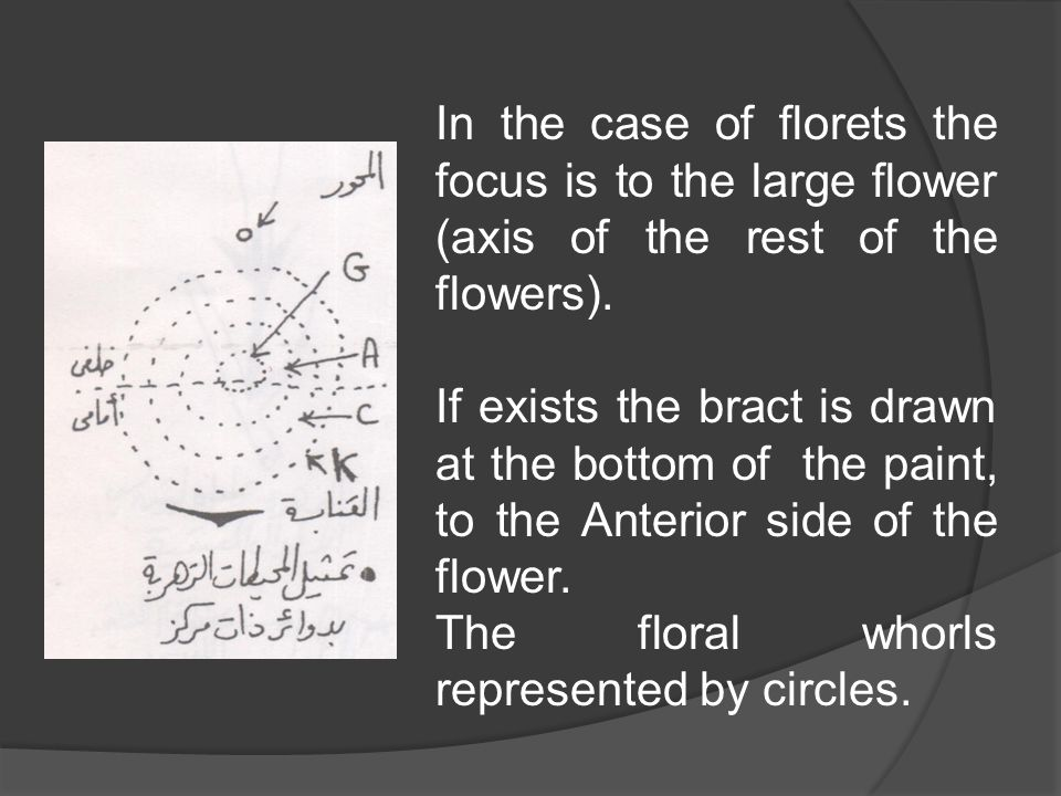 In the case of florets the focus is to the large flower (axis of the rest of the flowers).
