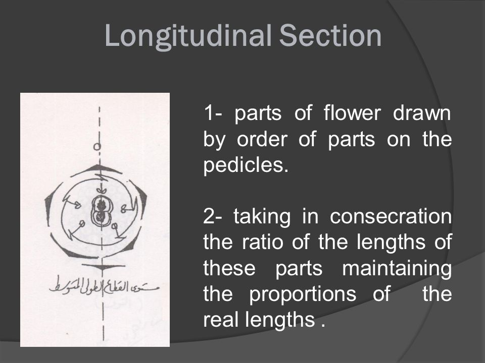 Longitudinal Section 1- parts of flower drawn by order of parts on the pedicles.