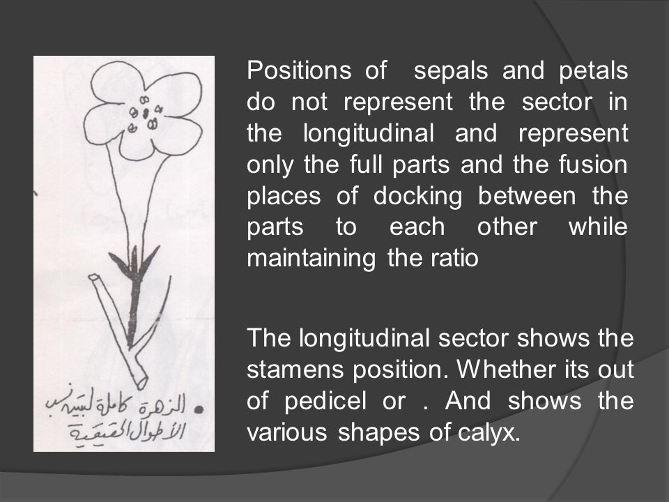 Positions of sepals and petals do not represent the sector in the longitudinal and represent only the full parts and the fusion places of docking between the parts to each other while maintaining the ratio