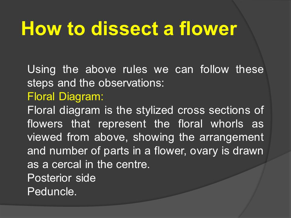 How to dissect a flower Using the above rules we can follow these steps and the observations: Floral Diagram: