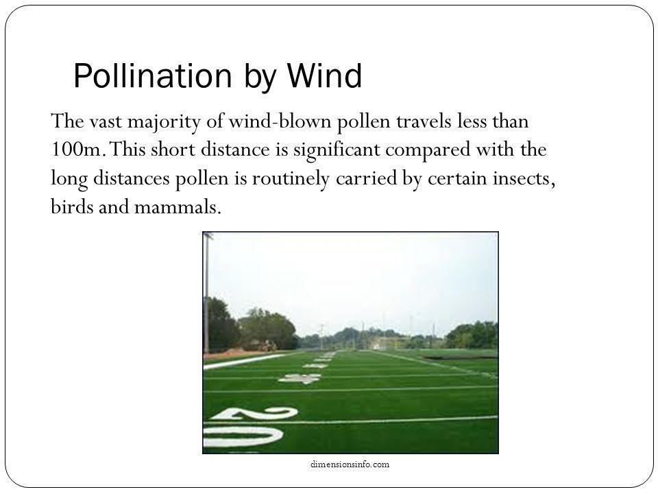Pollination by Wind