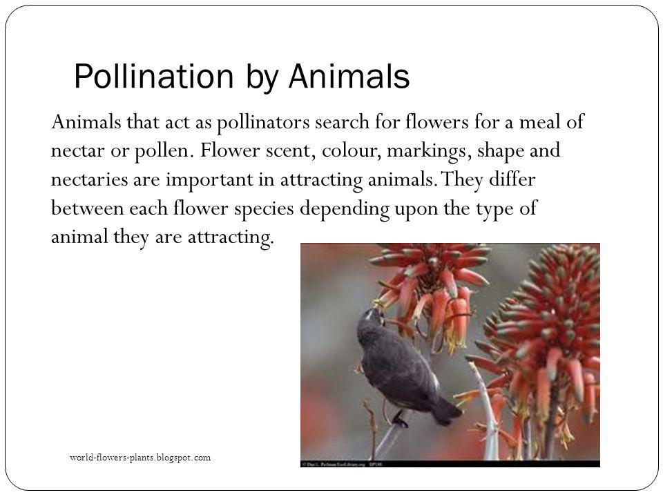 Pollination by Animals