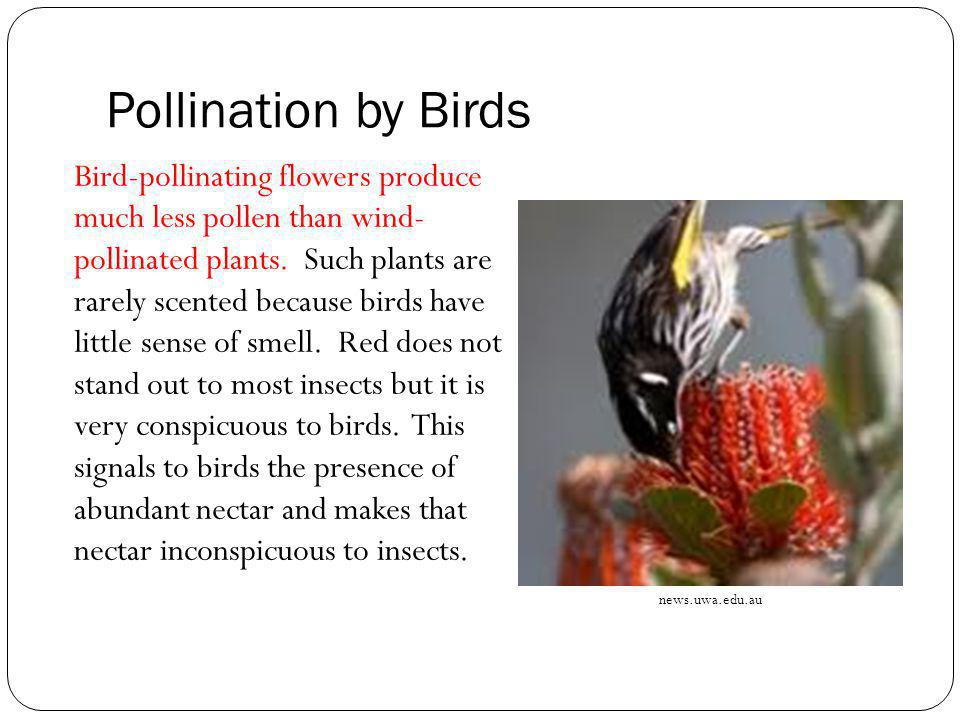 Pollination by Birds