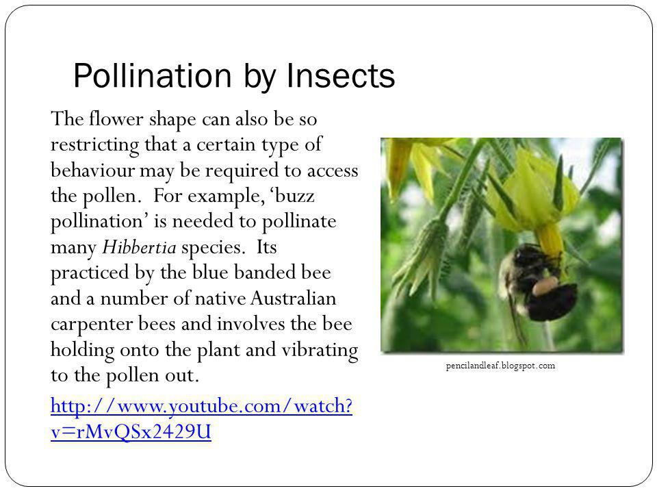 Pollination by Insects