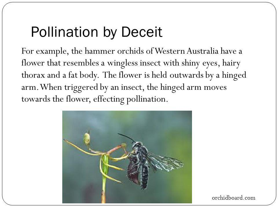 Pollination by Deceit