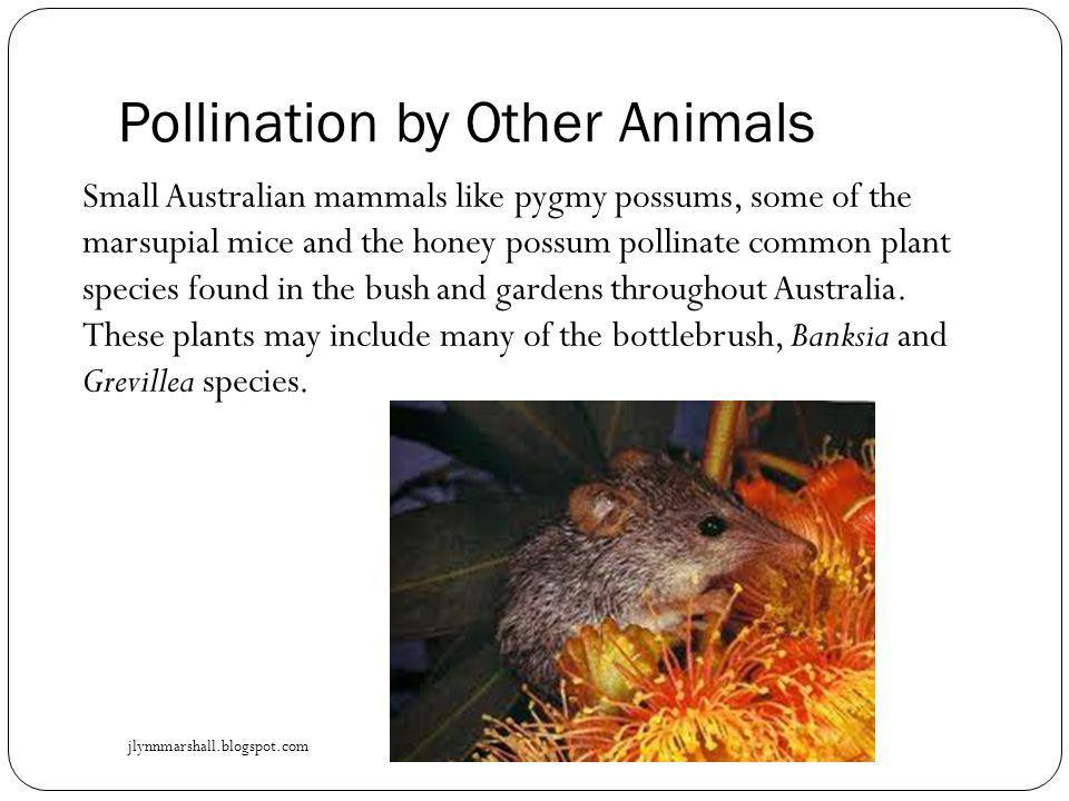 Pollination by Other Animals