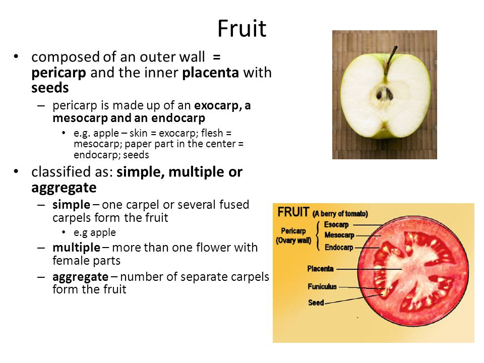 Fruit composed of an outer wall = pericarp and the inner placenta with seeds. pericarp is made up of an exocarp, a mesocarp and an endocarp.