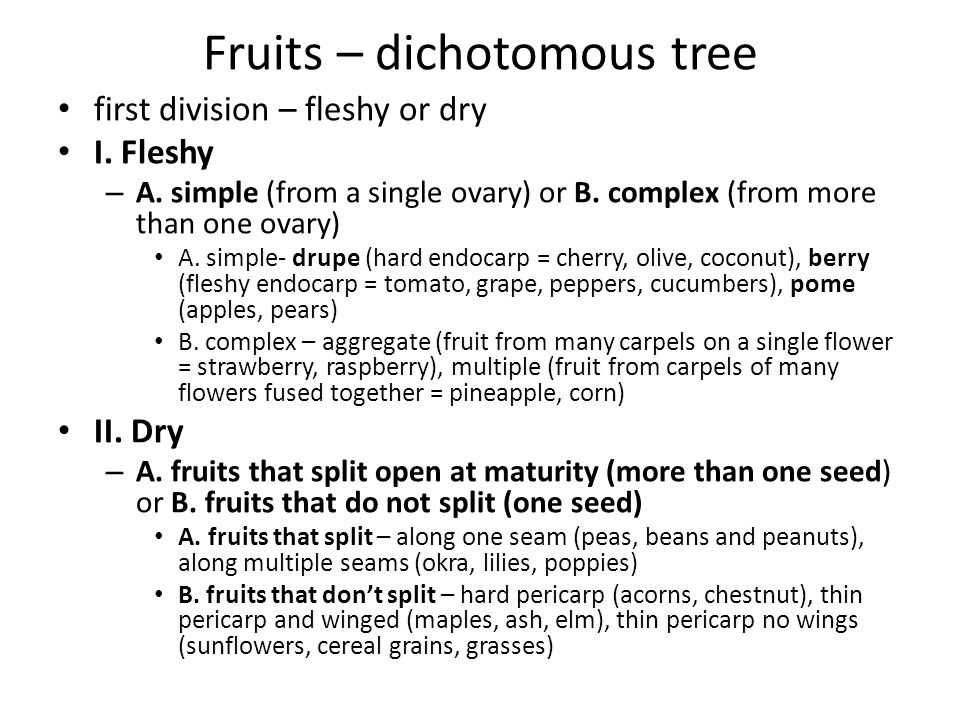 Fruits – dichotomous tree