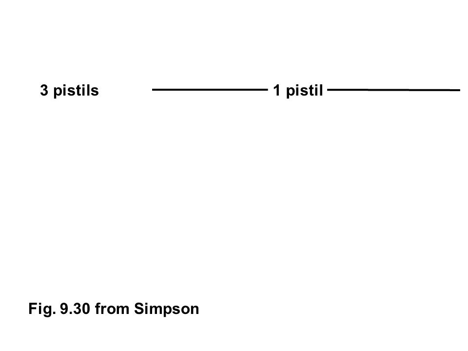 3 pistils 1 pistil Fig. 9.30 from Simpson