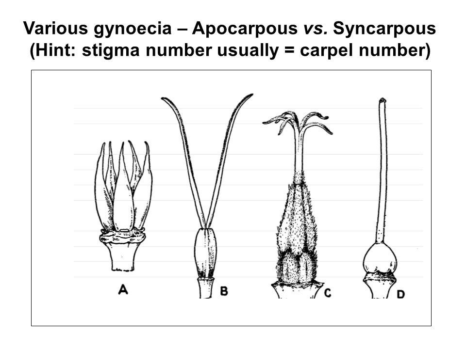 Various gynoecia – Apocarpous vs. Syncarpous
