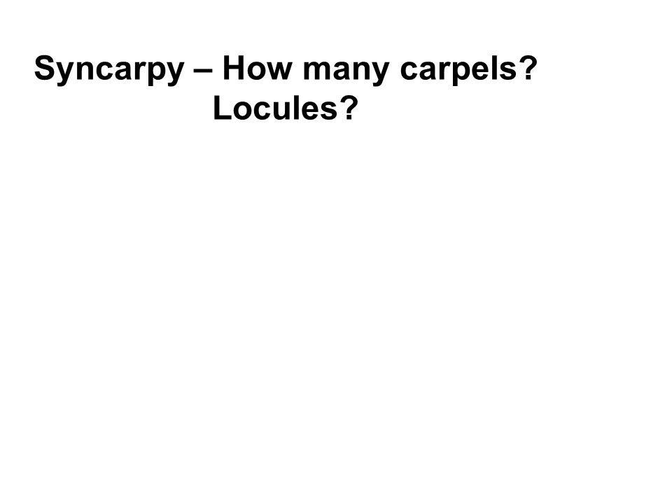 Syncarpy – How many carpels Locules