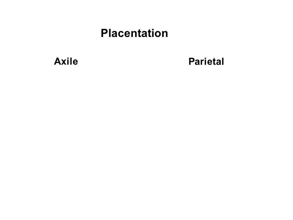 Placentation Axile Parietal