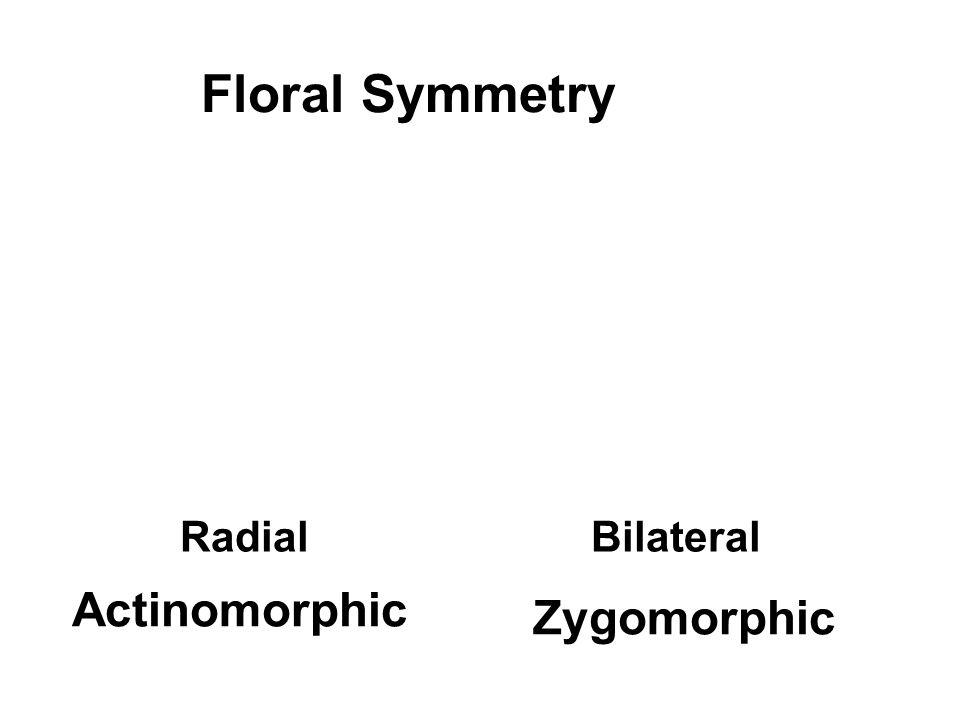 Floral Symmetry Radial Bilateral Actinomorphic Zygomorphic