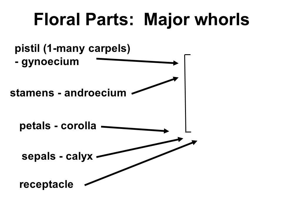 Floral Parts: Major whorls