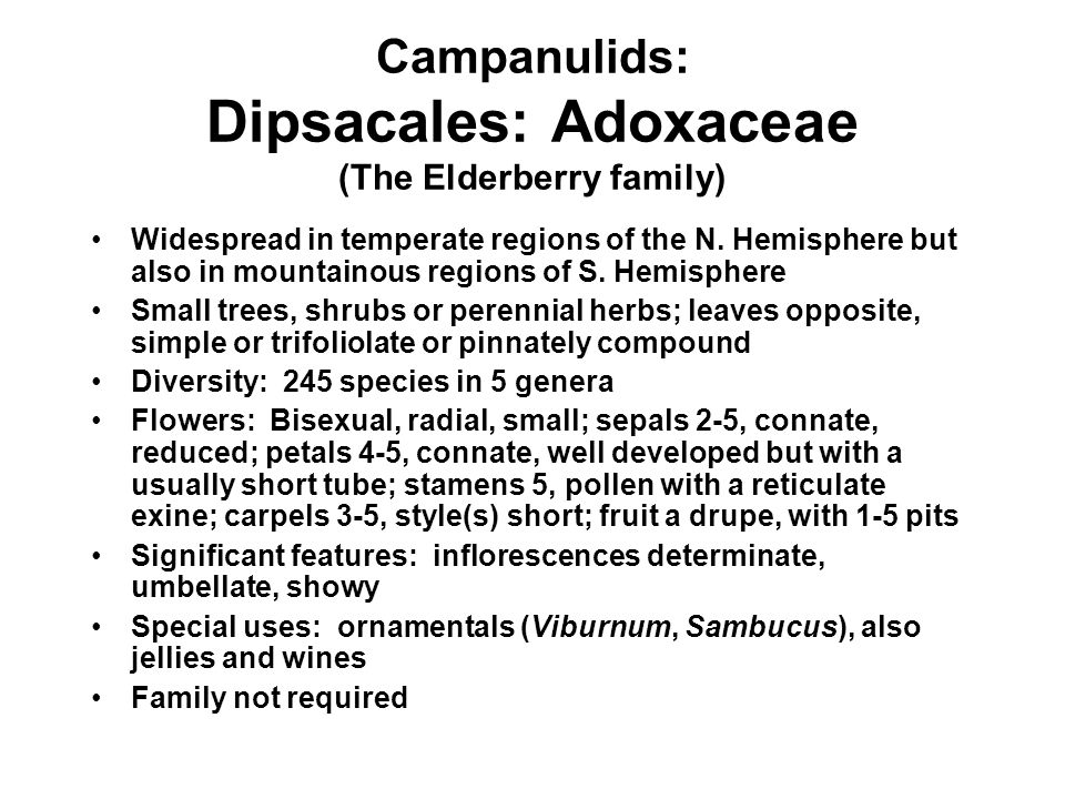 Campanulids: Dipsacales: Adoxaceae (The Elderberry family)