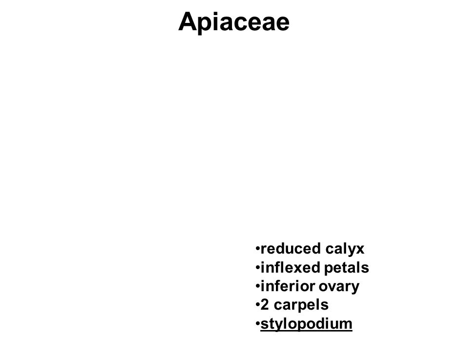 Apiaceae reduced calyx inflexed petals inferior ovary 2 carpels