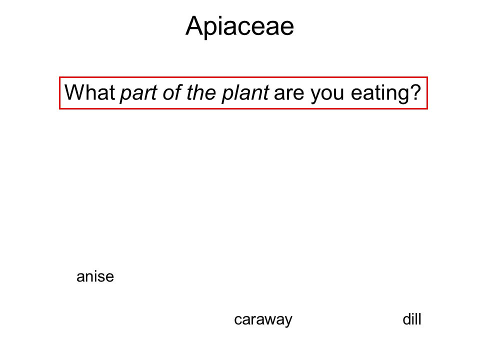 What part of the plant are you eating
