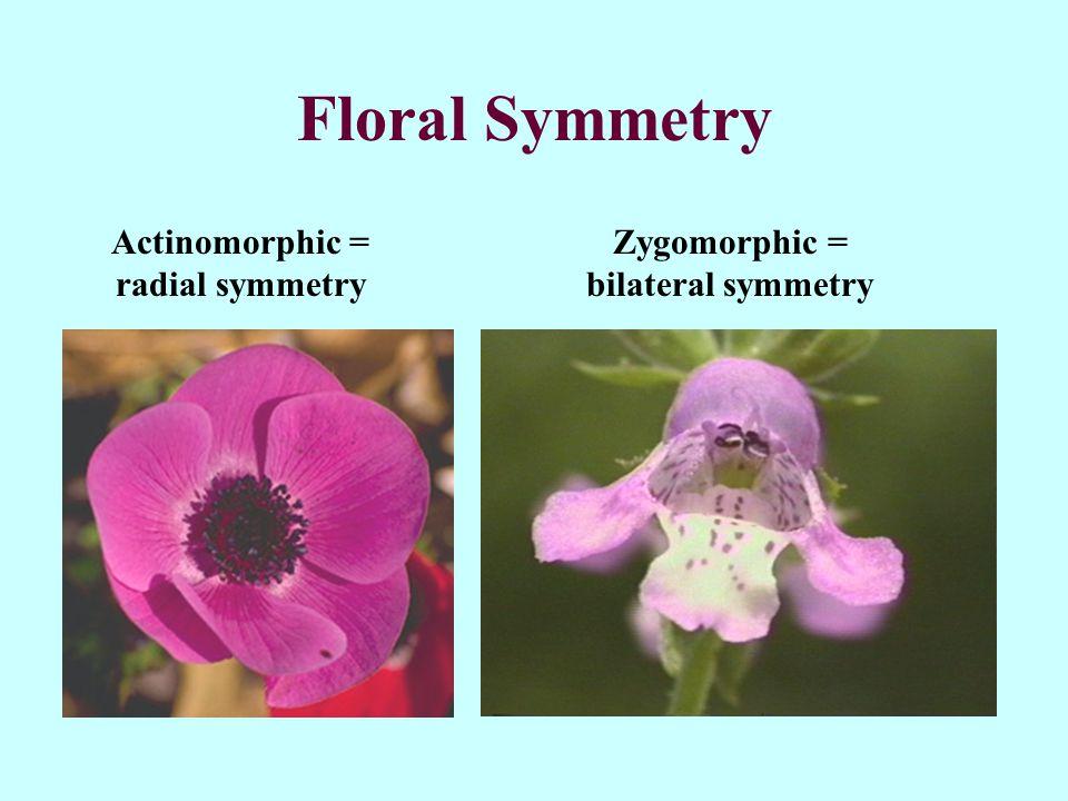 Actinomorphic = radial symmetry Zygomorphic = bilateral symmetry
