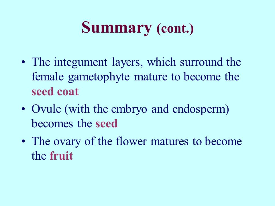 Summary (cont.) The integument layers, which surround the female gametophyte mature to become the seed coat.