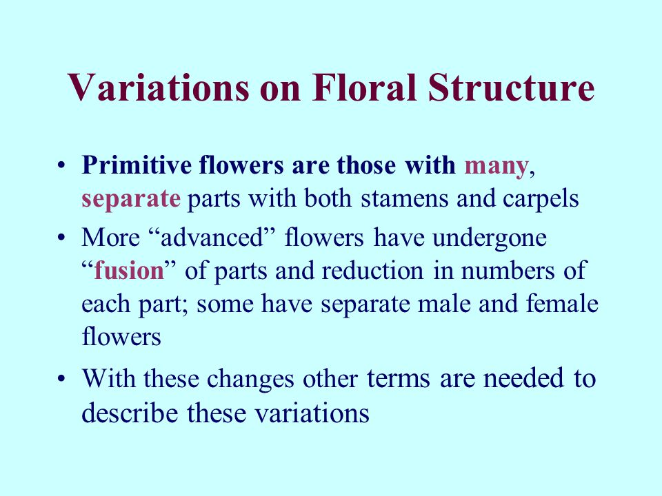Variations on Floral Structure
