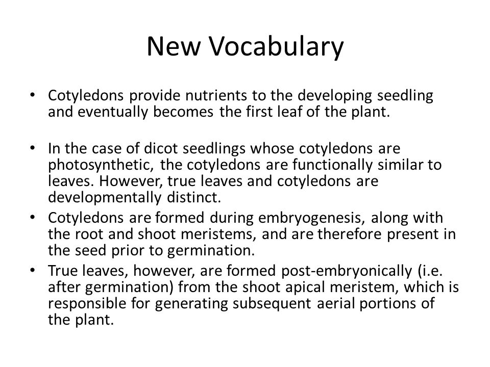 New Vocabulary Cotyledons provide nutrients to the developing seedling and eventually becomes the first leaf of the plant.