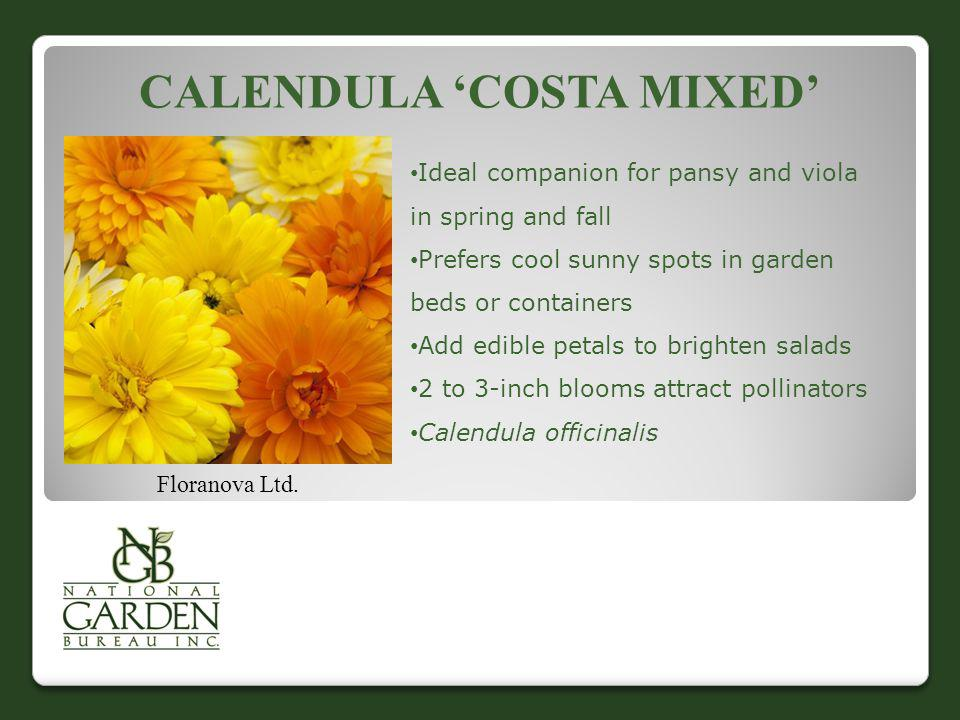Calendula 'Costa Mixed'