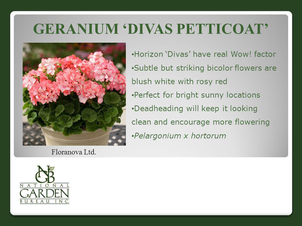 Geranium 'Divas Petticoat'