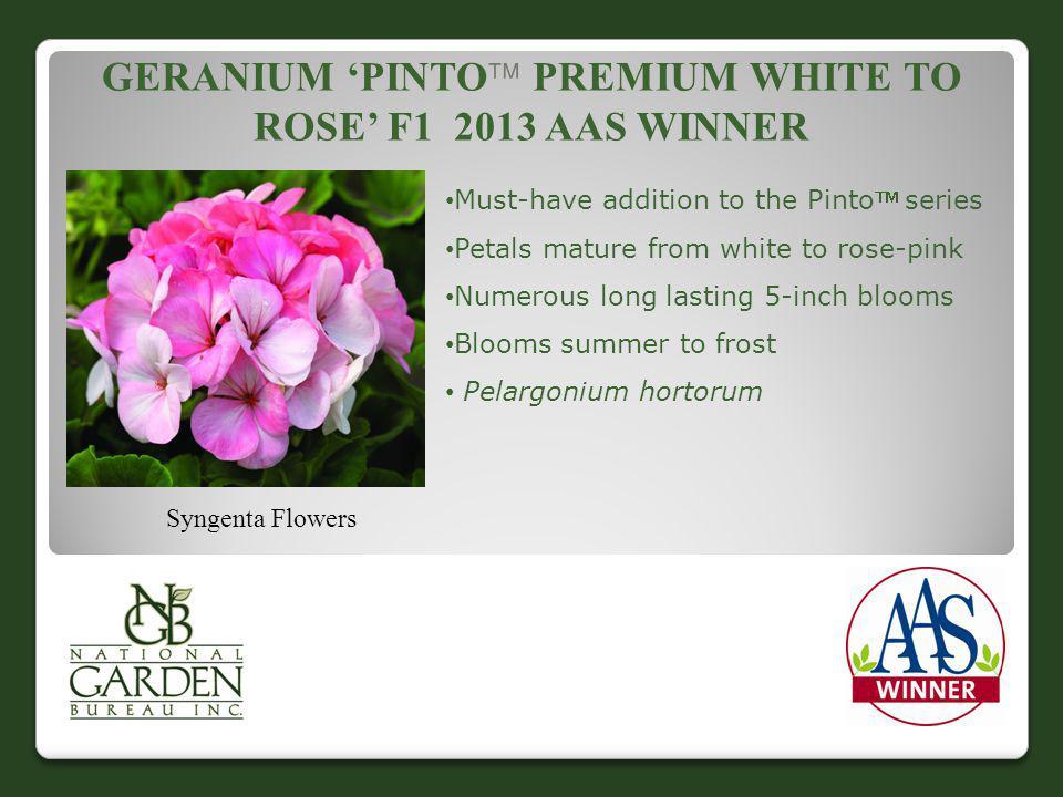 Geranium 'Pinto Premium White to Rose' F1 2013 AAS WINNER