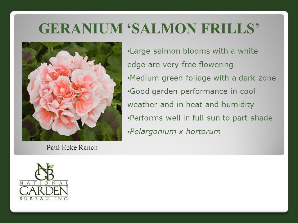 Geranium 'Salmon Frills'