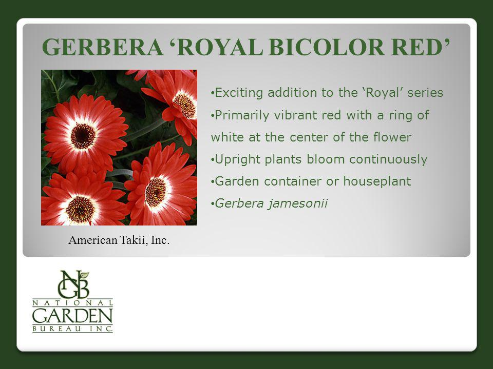 Gerbera 'Royal Bicolor Red'