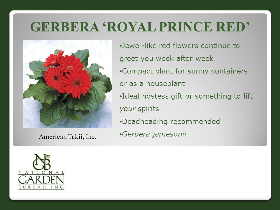 Gerbera 'Royal Prince Red'