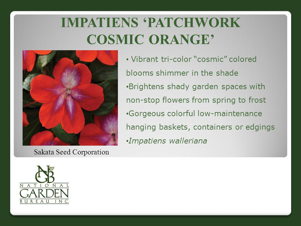 Impatiens 'Patchwork Cosmic Orange'