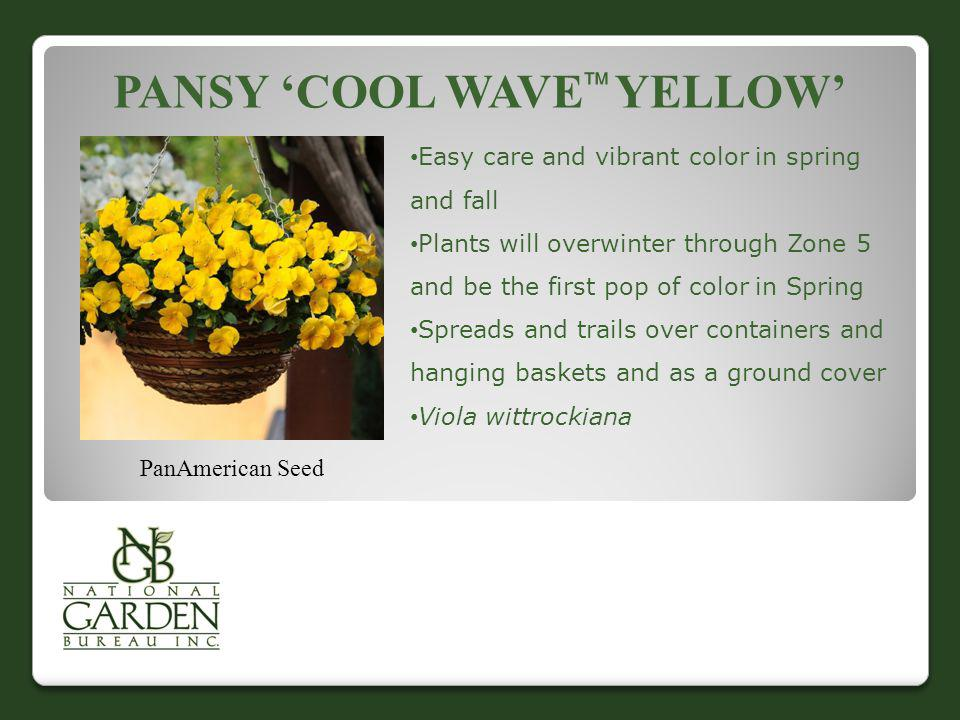 Pansy 'Cool Wave Yellow'