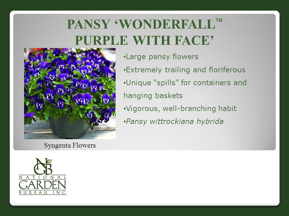 Pansy 'Wonderfall Purple With Face'