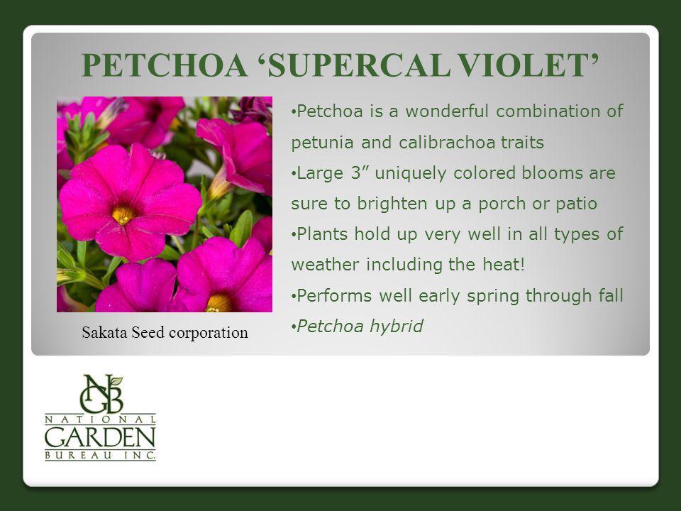 Petchoa 'SuperCal Violet'