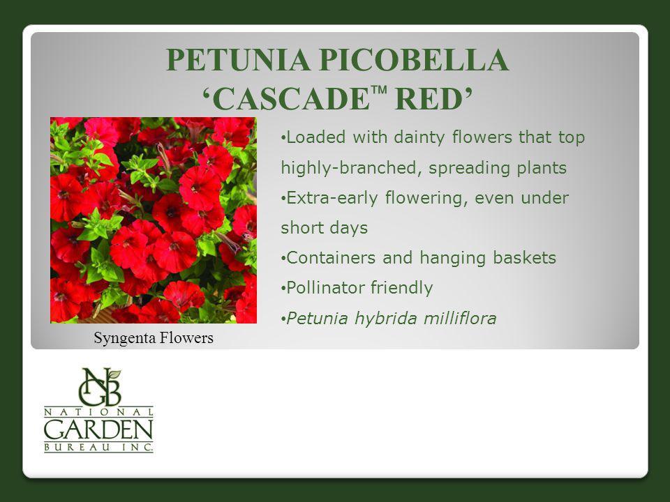 Petunia Picobella 'Cascade Red'