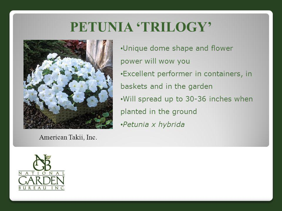 Petunia 'Trilogy' Unique dome shape and flower power will wow you