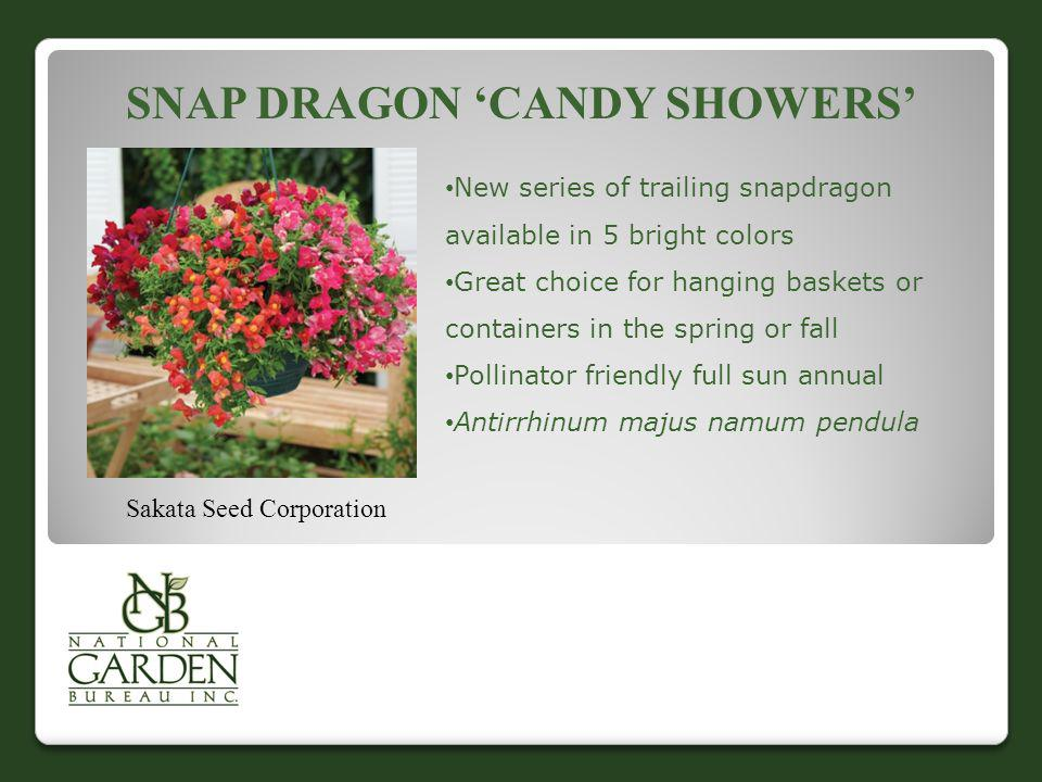 Snap Dragon 'Candy Showers'