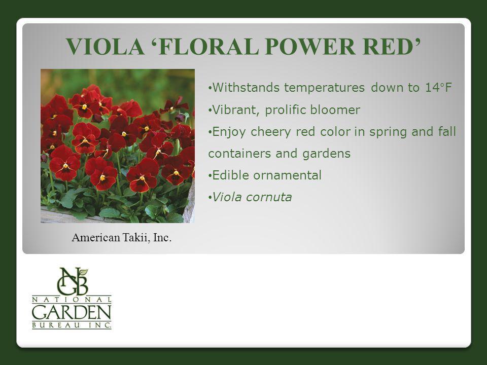 Viola 'Floral Power Red'