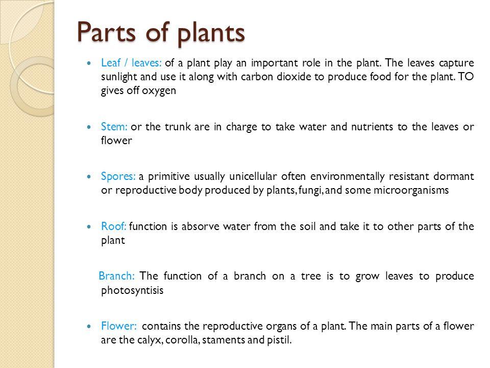 Parts of plants