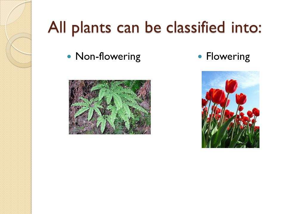 All plants can be classified into: