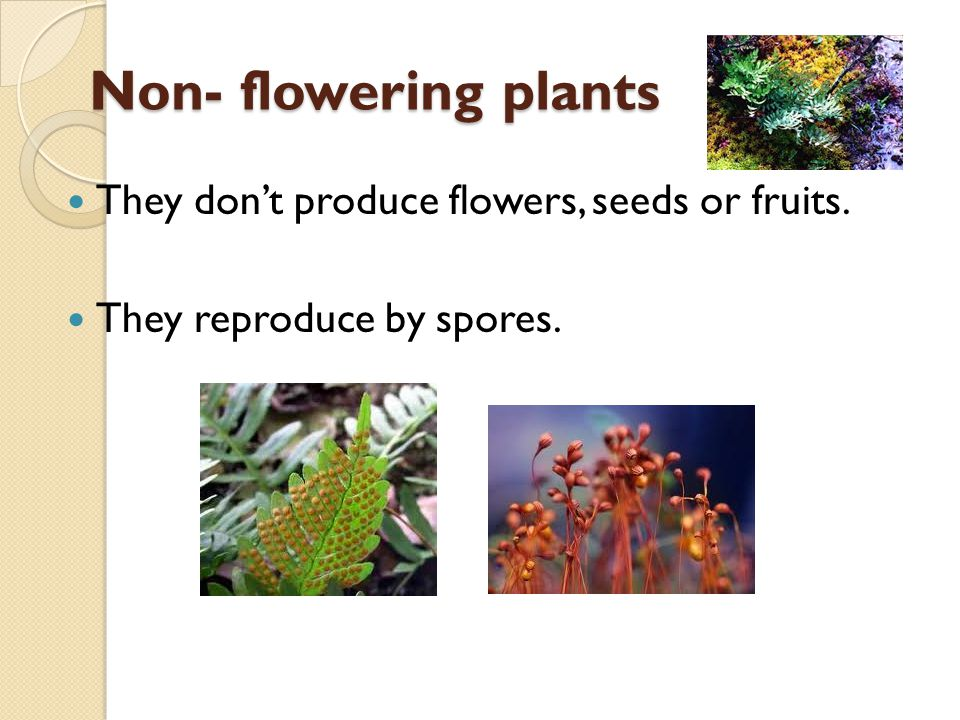 Non- flowering plants They don't produce flowers, seeds or fruits.