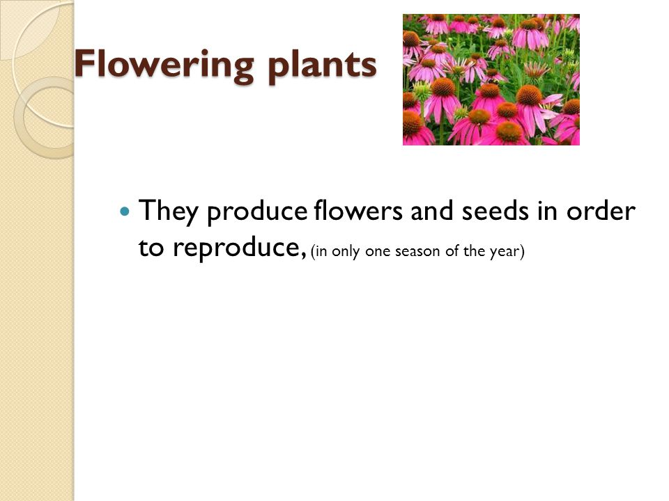 Flowering plants They produce flowers and seeds in order to reproduce, (in only one season of the year)