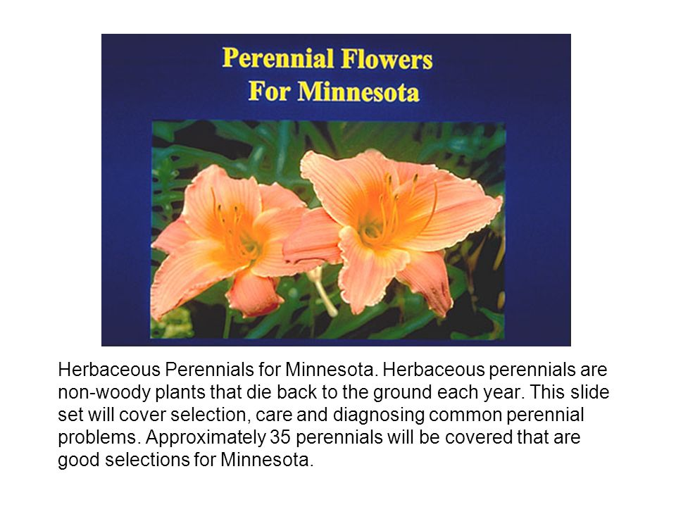 Herbaceous Perennials for Minnesota