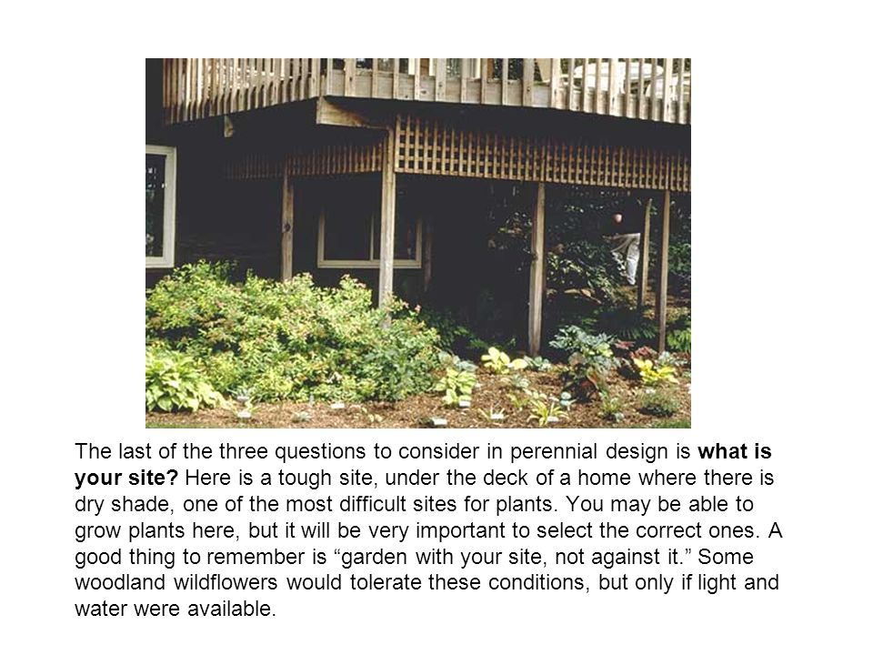 The last of the three questions to consider in perennial design is what is your site.