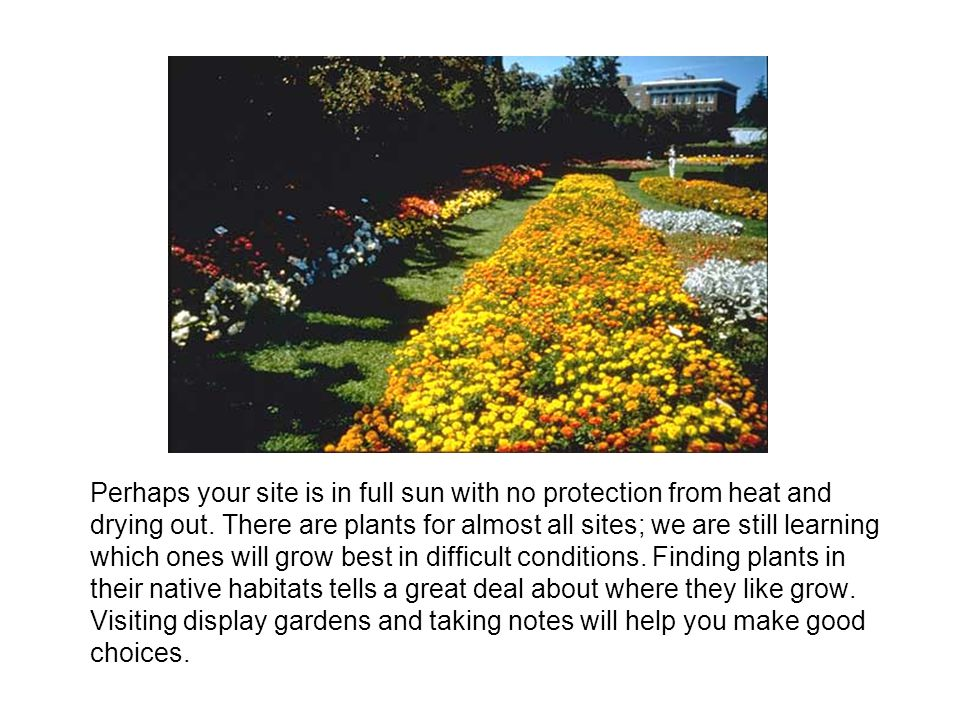 Perhaps your site is in full sun with no protection from heat and drying out.