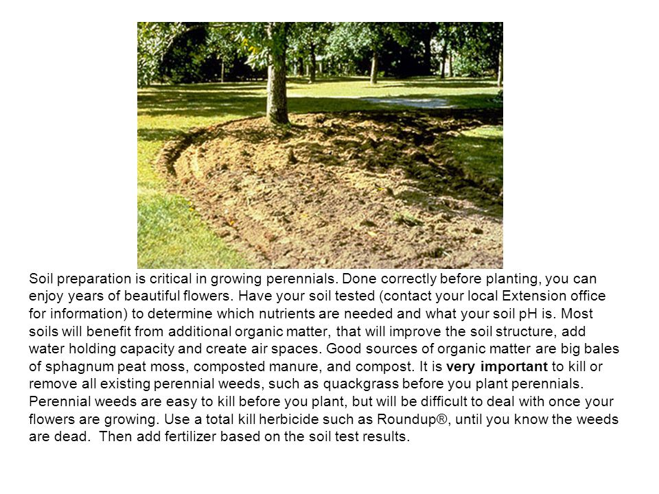 Soil preparation is critical in growing perennials