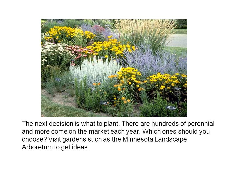 The next decision is what to plant